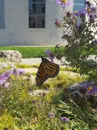 3m monarch butterfly habitat restoration project