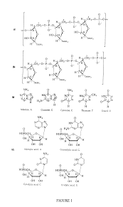 patent us20010053519 oligonucleotides google patents