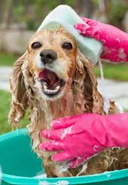 Make Bathtime Fun For Your Dog Bathing A Dog Without Tears And Tantrums