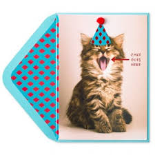 tag for cute cat birthday pictures simply cute kitten birthday