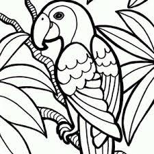 parrot coloring jungle parrot coloring 300x300 jpg