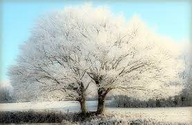 winter landscape white trees tree in the winter flickr