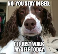 Stay In Bed Meme - judgemental dog memes imgflip