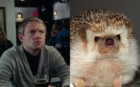 Benedict Cumberbatch Otter Meme - bbc sherlock fan forum serving sherlockians since february 2012