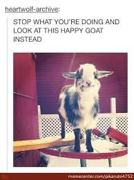 Funny Goat Memes - goat memes best collection of funny goat pictures