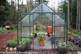 Backyard Greenhouse Winter My Winter Greenhouse Garden Lemons Lettuce Spinach Beets And
