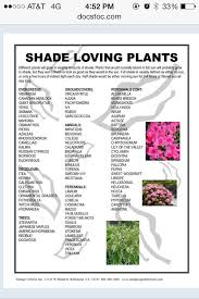 shade loving plants landscape pinterest plants gardens and