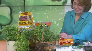 how to successfully grow herbs indoors youtube