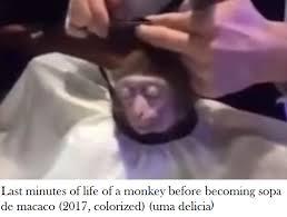 Meme Monkey - the sad truth of the monkey haircut meme monkey haircut know
