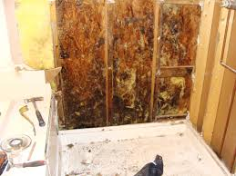 How To Remove Mold From Bathroom Walls - Removing mildew from bathroom walls 2