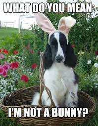 Easter Funny Memes - happy easter from petcarerx