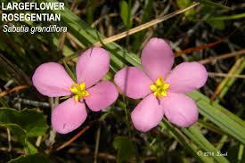florida native plants photos florida native plant what florida native plant is blooming today