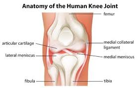 Right Knee Anatomy Kevin Durant Rehab Archives Ssor Physical Therapy