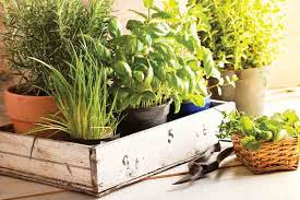 a guide to self sufficient living green living natural home