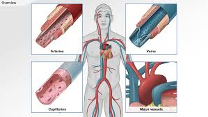 introduction to anatomy gallery learn human anatomy image