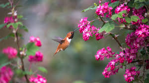 native plant sales this spring help birds by growing native plants audubon