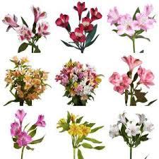 alstroemeria flower fresh alstroemeria flowers 80 stems 320 blooms alstroemeria
