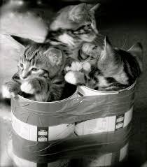 monday smiles u2013 south dakota v fifteen impounded cats from