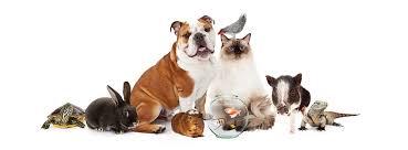 animali da cortile definizione i diritti degli animali