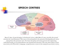 Anatomy And Physiology Of Speech Physiology Of Speech Prof Sultan Ayoub Meo Ppt Video Online