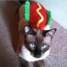 Kitten Halloween Costumes Pet 30 Pet Cat Halloween Costumes 2017 Cute Ideas Cat Costumes