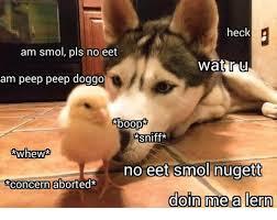 Memes Wat - heck am smol pls no eet wat ru am peep peep doggo sniff whew no