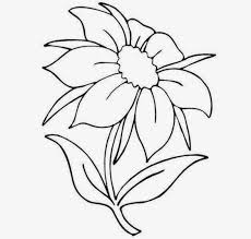 beautiful flowers drawing with color drawing of sketch