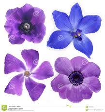 violet flower stock photo image 631240
