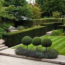 Topiary Cloud Trees - isn u0027t this the most amazing topiary border created with cones