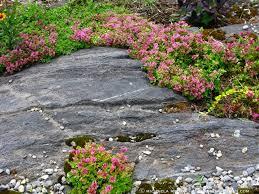 Rock Garden Cground Rock Garden Plants The Gardener S