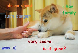 Create Your Own Doge Meme - image doge meme shot 1 jpg animal jam clans wiki fandom