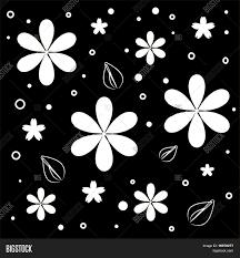 Imagenes Blancas En Fondo Negro   vector y foto flores blancas sobre fondo negro bigstock