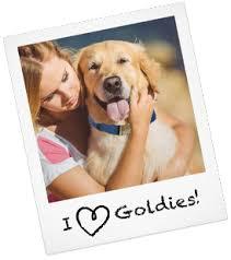 afghan hound adoption florida golden retriever puppies rescue and adoption near you