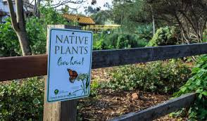 california natives plants garden native events involving gardening with california native