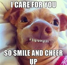 Dog Smiling Meme - these cheer up memes are sure to raise a smile best wishes and
