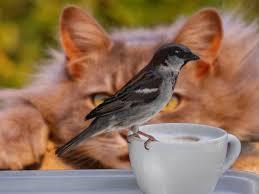 Backyard Wild Birds Backyard Bird Predators
