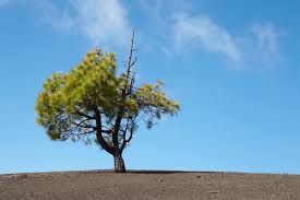 tree dream meaning what do dreams about trees mean dreamsleep