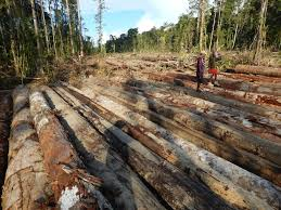 Lumber Liquidators News Your Floor May Be Made Of Illegal Tropical Wood
