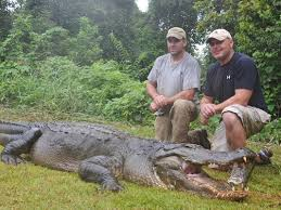 Mississippi wildlife images Mississippi wildlife dept accepting alligator hunting applications jpg
