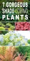best 25 flowering shade plants ideas on pinterest shade plants