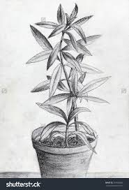 Pencil Sketch Of Flower Vase Flower Pot Pencil Shading How To Draw A Flower Vase Pencil