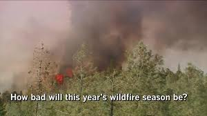 Wildfire Weed by Essential California Fact Versus Hype In California U0027s Wildfire