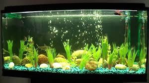 55 gallon home aquarium youtube