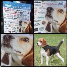 Animal Meme - dank meme roundup these companies test on animals memebase