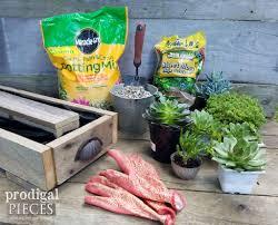 diy succulent centerpiece planter prodigal pieces