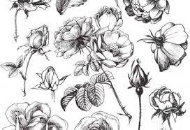 imagenes para colorear rosas dibujos de rosas para colorear vix