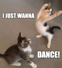 Jesus Cat Meme - nsp danny avidan i just want i just want dance jesus the
