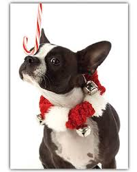 terrier holiday card set