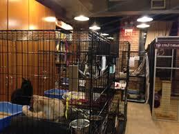 Hgtv Design Star by See Hgtv Designer Emily Henderson U0027s Animal Shelter Makeover