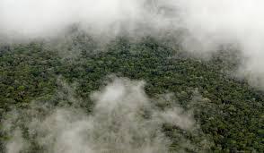 amazon rainforest native plants study shows the amazon makes its own rainy season